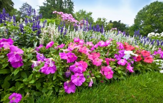 How to Master Gardening with a Busy Schedule